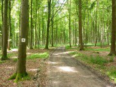 Wald bei Jägerhaus Degenfeld