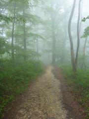 Zur Nebelhöhle