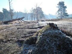 Morgensonne und -frost