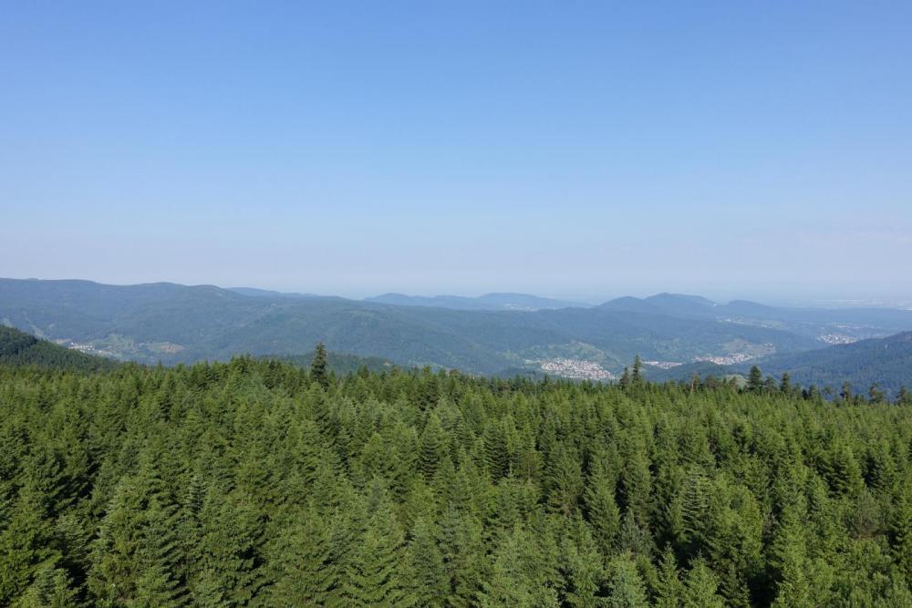 Blick vom Holohturm 2