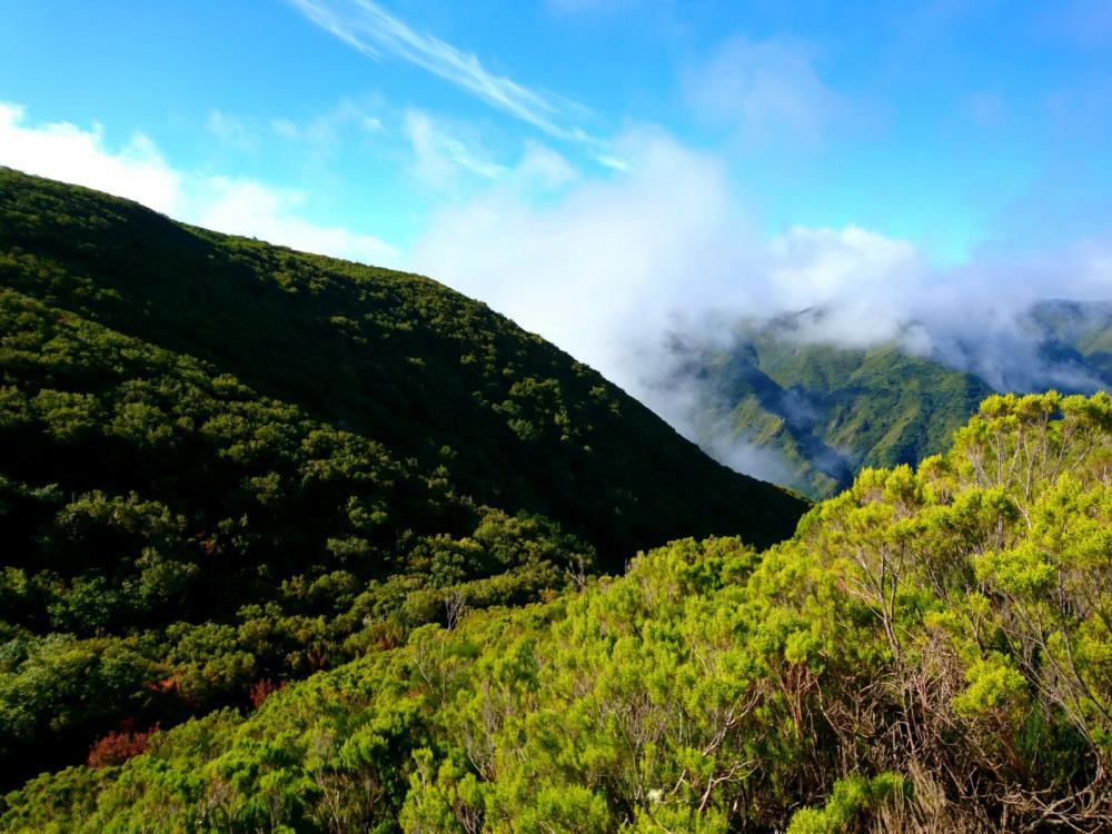 5a628322ef9b8_Madeira2018(88).thumb.jpg.7a6cbf014e103cc4ab6edb2c3cd72ba5.jpg