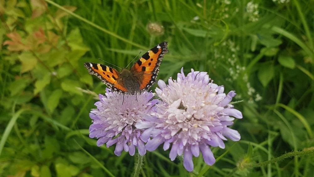 Butterfly.thumb.JPG.9e2d4dd958007cfbdcb0c1e19c57c43b.JPG