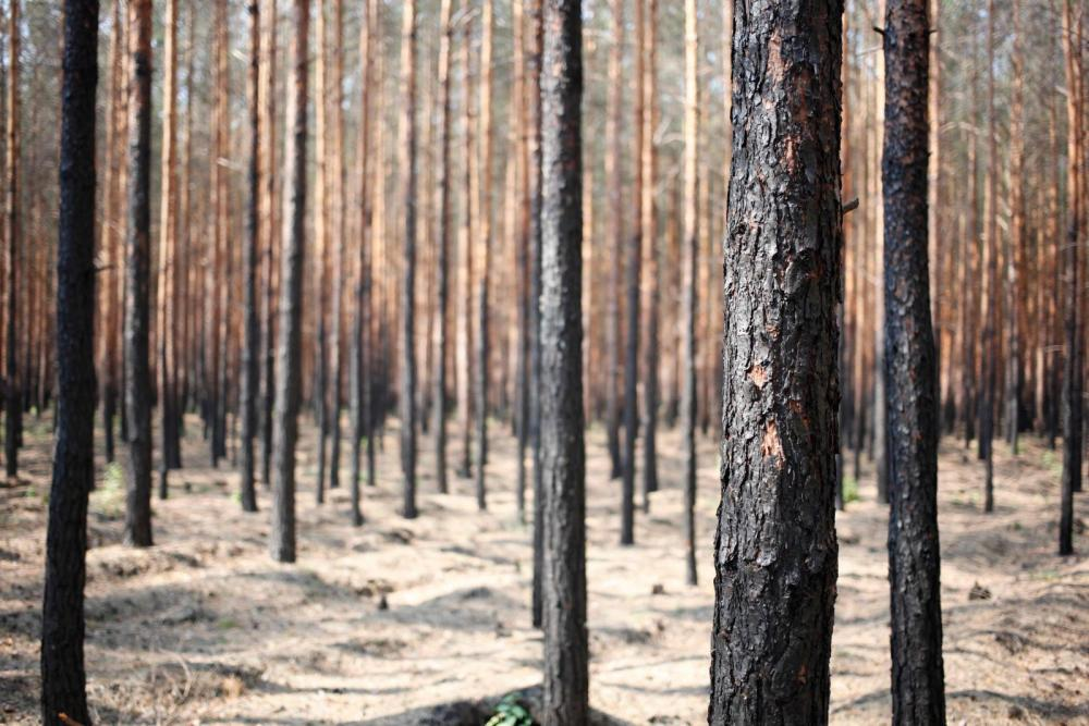 Wald.thumb.JPG.c5019efb27d841a355f467ccdf1f7b1d.JPG